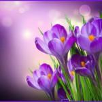 Der Frühling naht, die Krokusse spriessen....suchen und finden Sie jetzt den Partner über ERNESTINE, ganz einfach, ganz diskret.