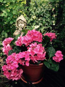 Garden_2959.JPG_1